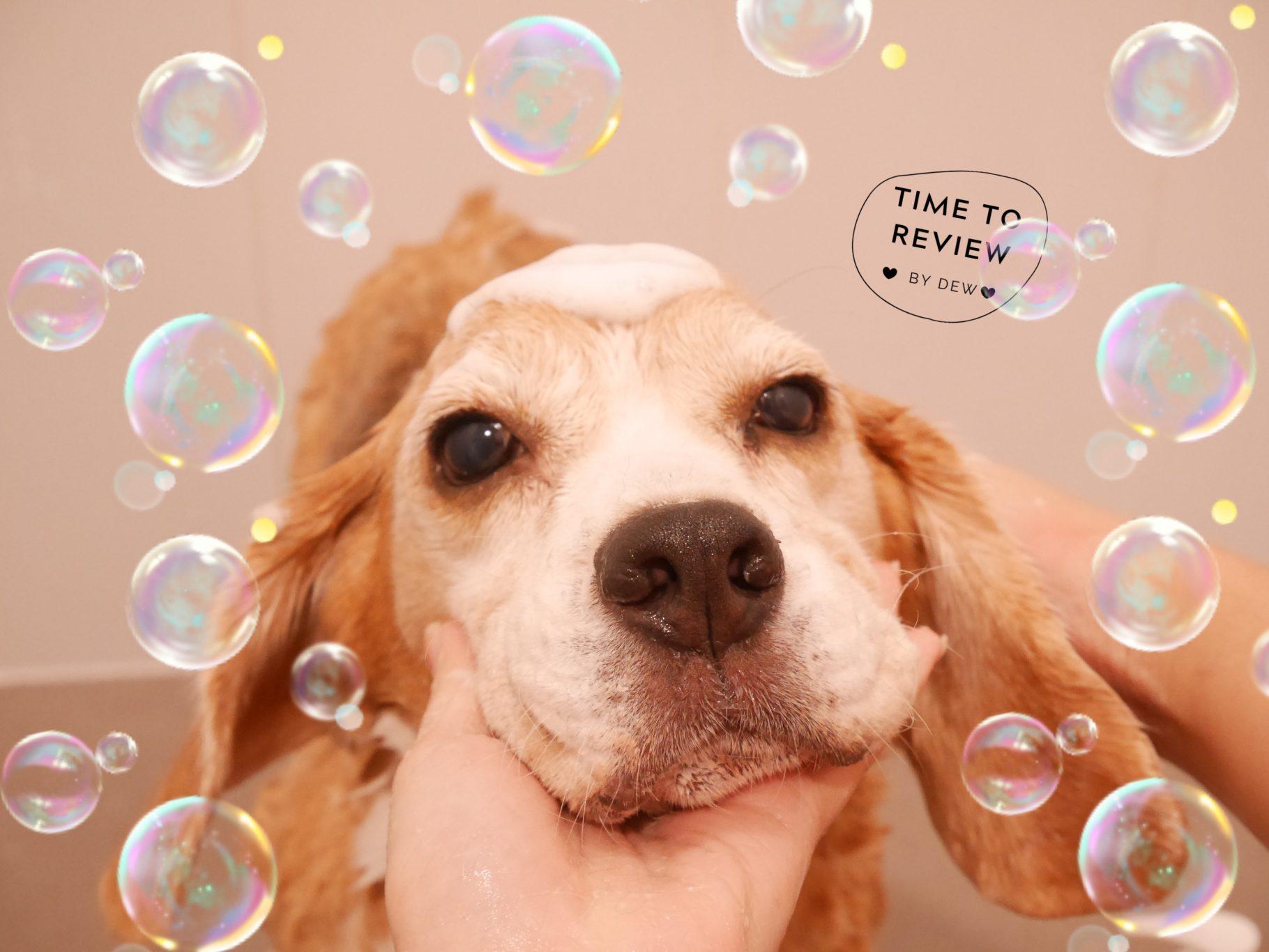 [Review] St.Harry แชมพูสุนัขสูตรอ่อนโยนจากธรรมชาติ